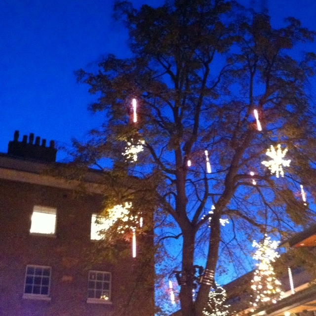 Christmas tree lights in Sloane Square