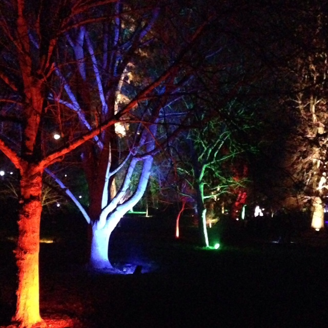 Syon Park enchanted forest walk